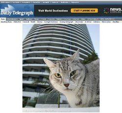 Gatinho Voodoo sobreviveu a uma queda de 34 andares em edifício localizado na Austrália (Foto: Reprodução)